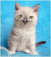 Kittowl by HumanDescent