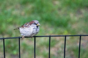 Bird in Central Park by parka