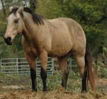 Dusty by stockhorse