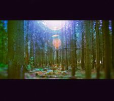 thing about forest by lafaette