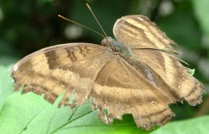 392 - butterfly by WolfC-Stock