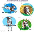 Dark Storm's Magical Mystery - Agility Titles by Bafa
