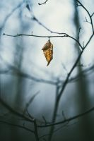Hanging On by Shreeb