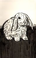 rabbit by erspears