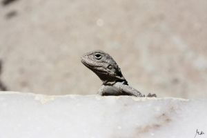 Reptile. by Ave117