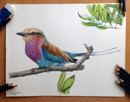 Bird Pencil Drawing by AtomiccircuS