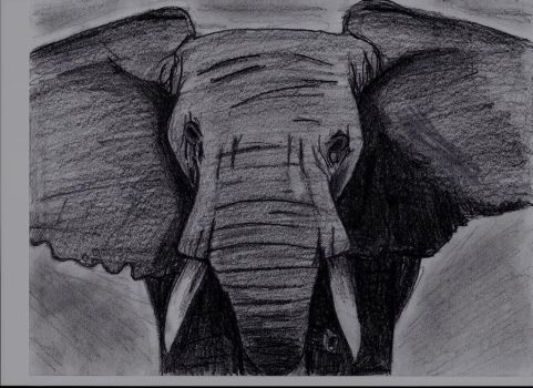 African Elephant by Thedarksurge
