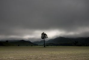 A real lone tree by lomatic