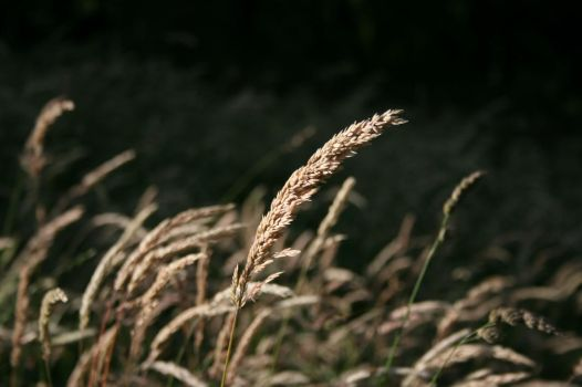 Grass Seeds by BubblingLaughter