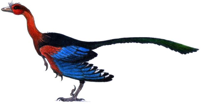 Archaeopteryx lithographica by ZEGH8578