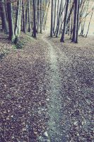 your way by ssilence