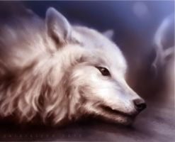 White wolf by korovachryst