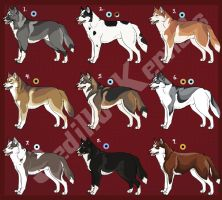 Siberian Husky Imports 04: CLOSED by Sedillo-Kennels