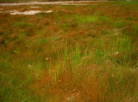 Grass by Pistol-Whipped-Sar