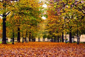 The shades of autumn by assiel22
