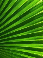 Palm Frond by joeyartist