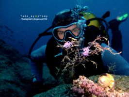 SeaSlugs+Diver_1 by hatesymphony