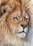 ACEO Lion by sschukina