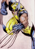 Color Pencil Wolvie by iEvEtS