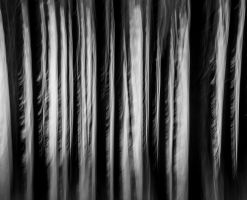 Trees in motion. by lomatic