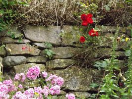 Wall with flowers by Hagrid-on-crack