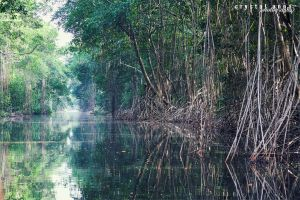 Reflecting Mangroves by freestyle-1love