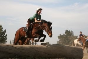 Bay Quarter Horse cross mare, eventing by HorseStockPhotos