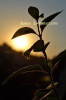 the sun and a plant by Daneas