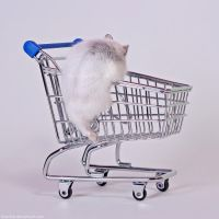 Herr Hildezart likes to shop by hoschie