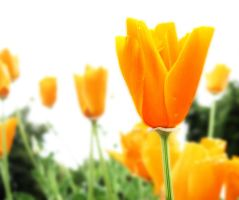 orange. by lacey69marie