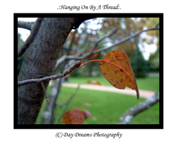 .:Hanging on by a Thread:. by DayDreamsPhotography