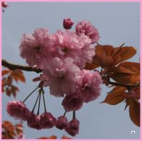 LATE BLOSSOM by GeaAusten