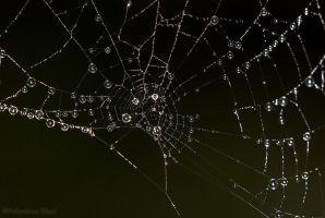 Silver web by Amersill