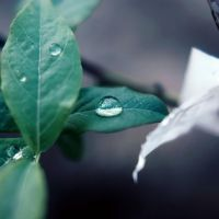 One magic drop of water by BlueColoursOfNature