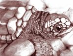 turtle by PurpleTrigger