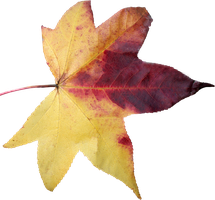Leaf PNG 05 by Thy-Darkest-Hour