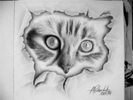 cat rip by pitschke