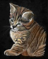 scratch board kitty- color by cheshireINwonderland