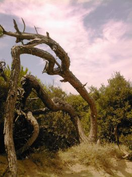 Twisted tree by Simbores