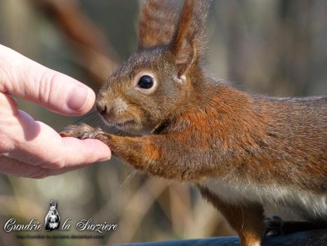 Squirrel 256 - Hi! Nice to meet you! by Cundrie-la-Surziere