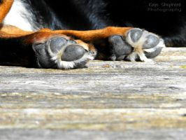 Textured Paws by KayeShepherd