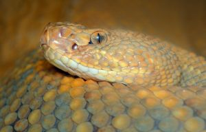 Western Diamondback by Blaklisted