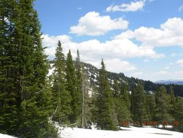 Snowy Yellowstone Forest 3 by KayJay777