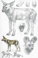ASP2: African wild dog by Dragarta