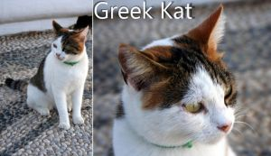 Greek Kat by maoweb