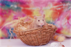 Happy Easter Hamster IV by whensummerends