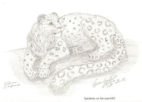 Snow Leopard by Spudnuts