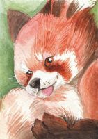 ATC - Red Panda by Marji4x
