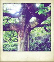 Tree... by ansdesign