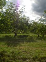 Orchard 14 by gsdark-stock